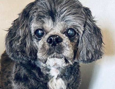 dog baths sherman il
