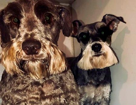 dog grooming sherman illinois